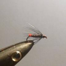 Aeschenfliegen (7)